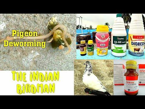 Hatékony gyógymódok minden parazita ellen