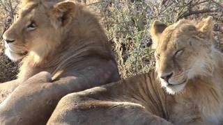 Tanzania Safari 2017 - Tarangire, Ngorongoro & Serengeti (Part 1/2)
