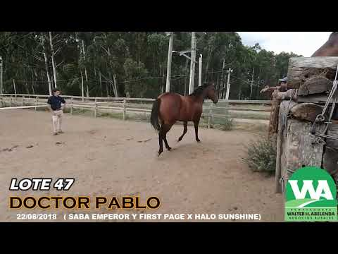 Lote DOCTOR PABLO