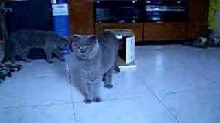 Cat from the box, lamma island hong kong