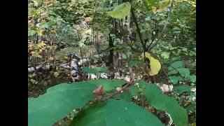 #Липецкая_Область. Село Казино. Ищем грибы. #GoProHERO7BLACK