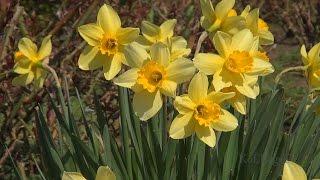Опять весна... И будет волшебство весны...