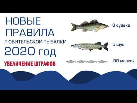Новые правила по закону о рыбалке в 2020 году, ужесточение штрафов