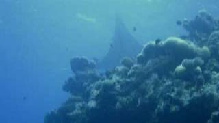 preview picture of video 'Shell Island Manta Kwajalein Atoll 2005'