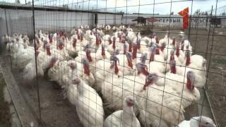 Тульские фермеры преуспевают в птицеводстве