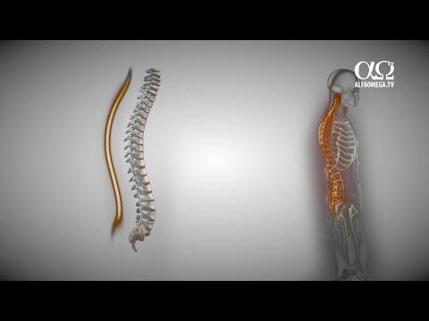 Unguent osteocondroza partea inferioară a spatelui