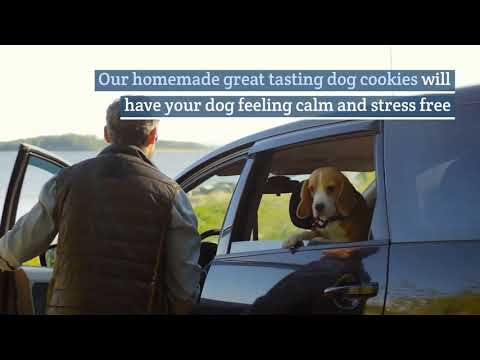 Download Medication For Dog Anxiety Mp4 HD Video and MP3