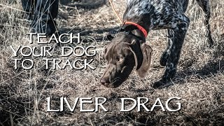 Teach Your Dog To Track Step 1 - Liver Drag