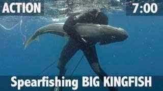 Spearfishing BIG KINGFISH