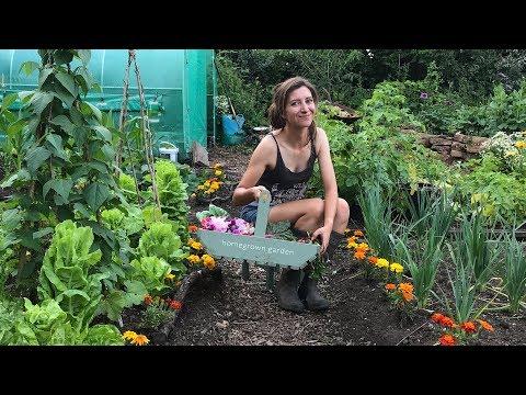 July Allotment Tour & Harvest / Homegrown Garden