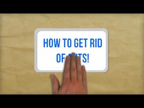 Video How to Get Rid of Ants Naturally | Best Tips for Getting Rid of Ants in Your Kitchen