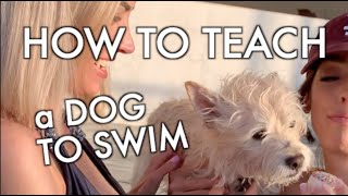HOW TO TEACH A DOG TO SWIM 💦🧁🐶  (These tips could save a pet's life!)