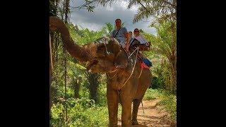 Elephant show in Thailand. Шоу слонов в Тайланде