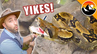 BIG ANGRY SNAKE - Can it be Rescued?