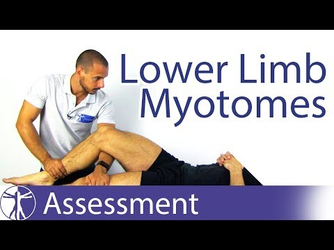 Myotomes Lower Limb | Peripheral Neurological Exam | Youtube Search