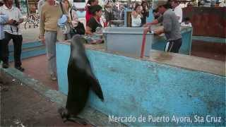 preview picture of video 'Mercado de Puerto Ayora'