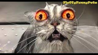 СМЕШНЫЕ ПРИКОЛЫ С ЖИВОТНЫМИ !РЖАКА ДО СЛЕЗ! ЛУЧШАЯ ПОДБОРКА 2019 коты и собаки - Fluffy Funny Pets