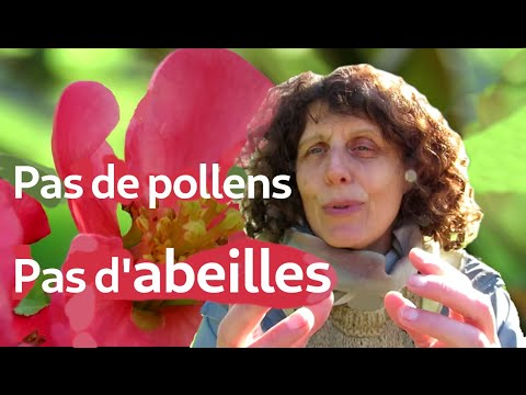 , title : 'Pas de pollens, pas d'abeilles!