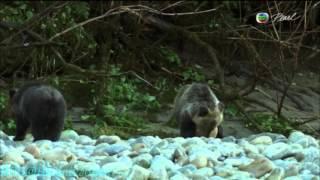 BBC «Как устроена природа  Сезонные леса»