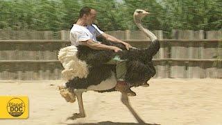 Ostrich Riding   Kholo.pk