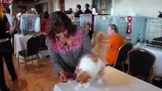 Malta Cat Club 3rd International TICA Show