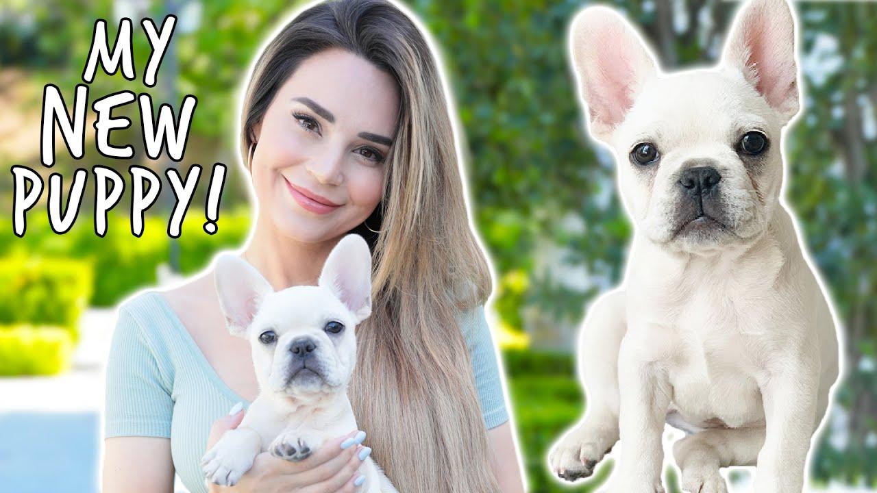 I Got A New Puppy! + Dog Haul thumbnail