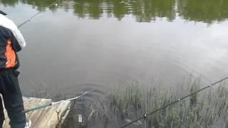 Рыбалка в вашутино форум последняя страница