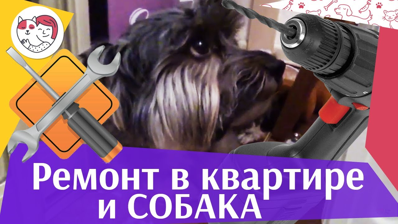 4 совета, как обезопасить собаку во время ремонта на ilikepet