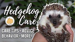Hedgehog Owner Care Tips! | Pet Hedgehog Care Guide