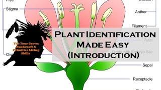 (Bushcraft Skills) Plant identification made easy, for the novice.