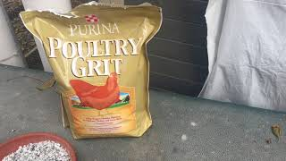 Chicken Grit - What's It For And Do I Need It For My Backyard Flock?