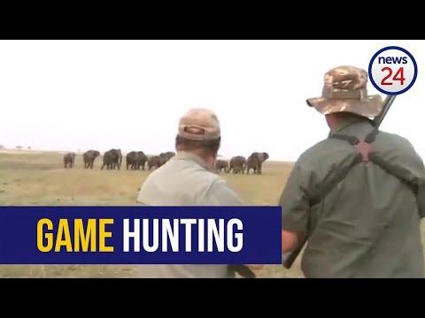 Cargan elefantes contra cazadores después de disparo a uno de los suyos