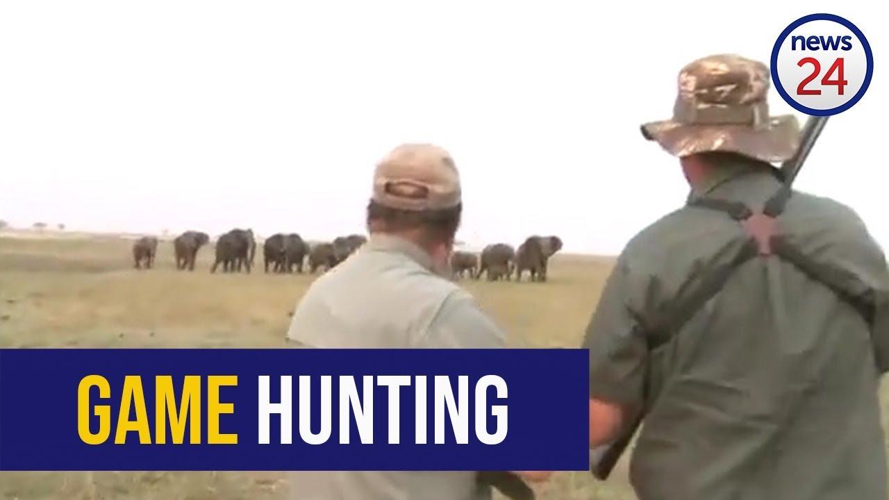 В Намибии разъяренные слоны испугали охотников