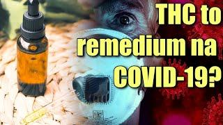 Trzy nowe badania wskazują że THC może leczyć COVID-19