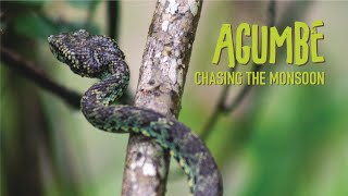 SNAKES, LEECH ATTACK AND RAINFOREST ADVENTURES   Udupi to Agumbe   Chasing the Monsoon   EP 7 Agumbe