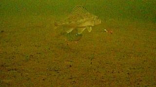 Камера для рыбалки нужна или нет