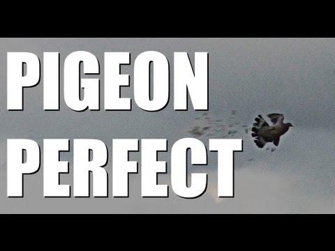 Fieldsports Britain, Pigeons, roebuck and airgunning tips, episode 136