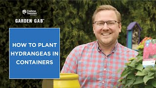 How To Plant Hydrangeas In Containers