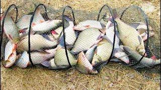 Как правильно ставить мордушку для ловли рыбы