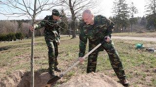 Александр Лукашенко принял участие в республиканском субботнике