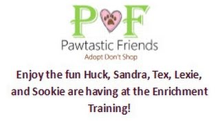 Enjoy the Fun with Huck, Sandra, Tex, Lexie and Sookie!