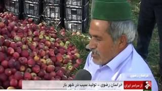 Iran Shahr-e Bar village, Apple picking برداشت سيب روستاي شهربار نيشابور ايران