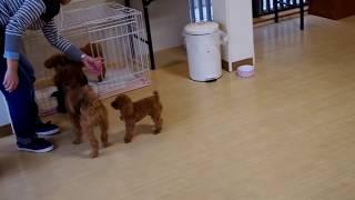 犬4匹一緒に遊ぶ