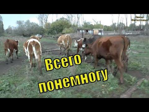 Уборка. Сено. Вредные коровы. Первые шаги. Стройка/ Семья Фетистовых