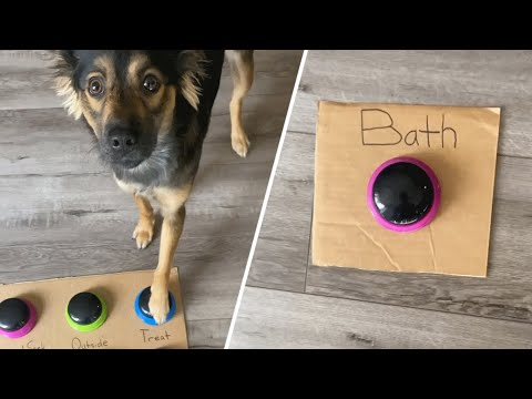 This Cute Dog Will Bowl You Over With Her Intelligence