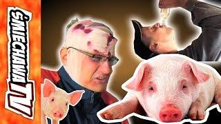 """Świnie 2 """"u Szwagra"""" - Video Dowcip"""