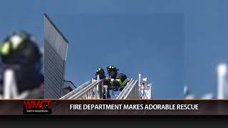 Marlborough Fire Department Makes An Adorable Rescue