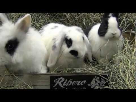 Heno de Festuca 5 kg. conejos y roedores