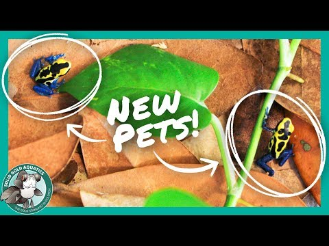 NEW DART FROGS // Setting Up a Temporary Tank