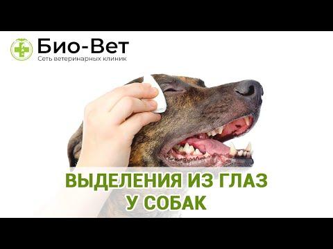 Выделения Из Глаз у Собак 🐶 // Сеть Ветклиник БИО-ВЕТ